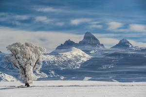 Lone Cottonwood and Teton Mountains from Driggs, Idaho by Howie Garber