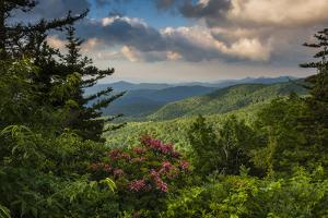 Mountain Laurel, Sunrise, Beacon Heights, North Carolina by Howie Garber