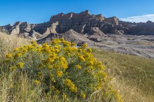 Rabbitbrush and Grasslands, Badland National Park, South Dakota by Howie Garber