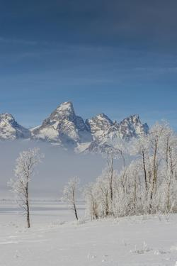 Rimed Cottonwoods and Tetons from Antelope Flats Road by Howie Garber