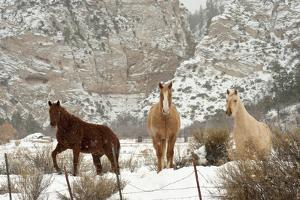 Three Horses in Pasture with Snow, Near Kanab, Utah by Howie Garber