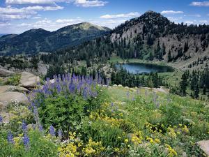 Wildflowers and Lake Catherine, Pioneer Peak, Uinta Wasatch Nf, Utah by Howie Garber