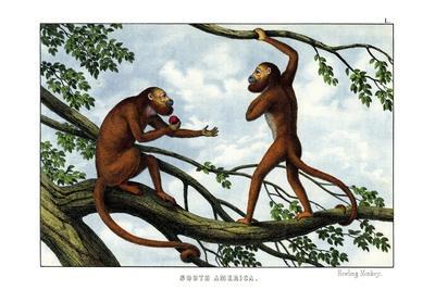 https://imgc.allpostersimages.com/img/posters/howling-monkey-1860_u-L-PVBUQW0.jpg?p=0