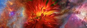 Hubble Galaxy with Red Chrysanthemums