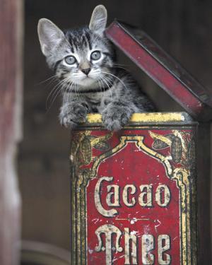 Kitten in Box by Hubert