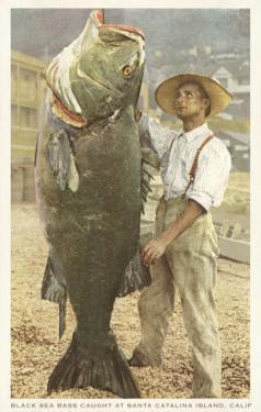 Huge Black Sea Bass, Catalina, California