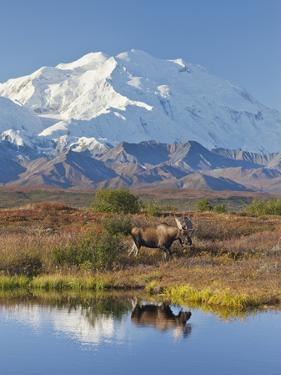 Mt. Mckinley, Denali National Park, Alaska, USA by Hugh Rose