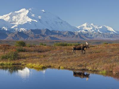 Mt. Mckinley, Denali National Park, Alaska, USA