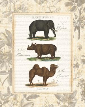 African Animals II by Hugo Wild