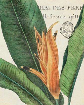 Botanique Tropicale II by Hugo Wild