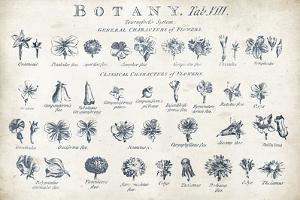 Botany Tab VIII Indigo and White by Hugo Wild