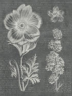 Eden Spring I Gray by Hugo Wild