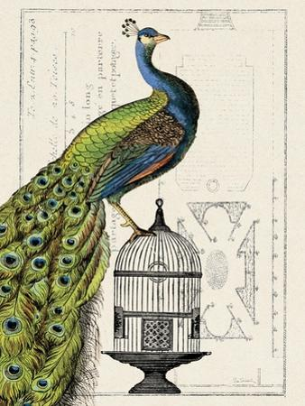 Peacock Birdcage I by Hugo Wild