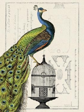 Peacock Birdcage I by Hugo Wild