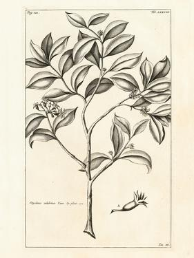 Tropical Leaf Study I by Hugo Wild