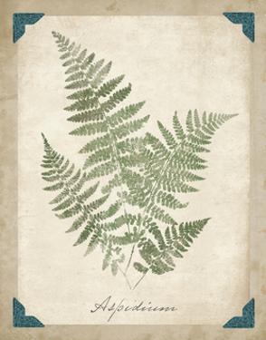 Vintage Ferns IX by Hugo Wild