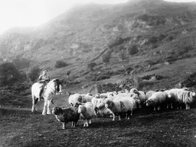 Horseback Shepherdess by Hulton Collection