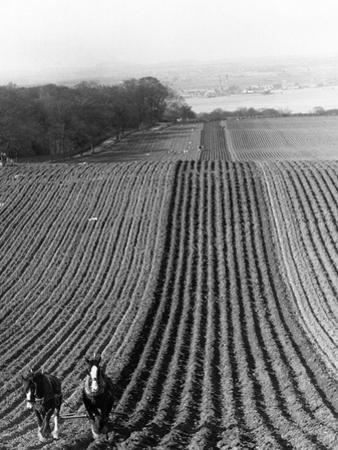 Straight Furrows by Hulton Collection