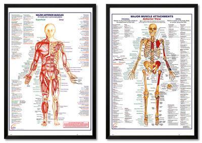Human Anatomy Framed Set