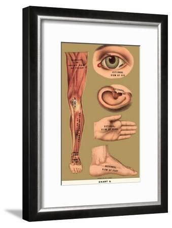 Human Body Parts--Framed Masterprint