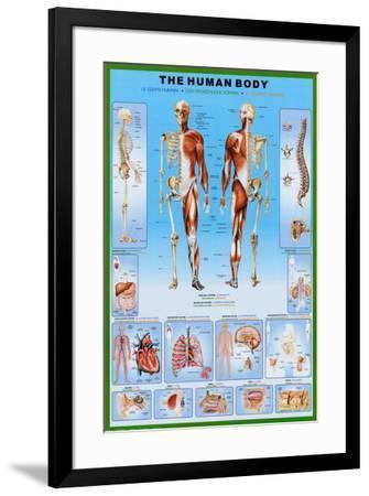 Human Body--Framed Poster