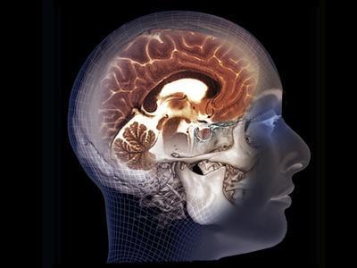 https://imgc.allpostersimages.com/img/posters/human-brain-mri-scan_u-L-Q1BUJO60.jpg?artPerspective=n