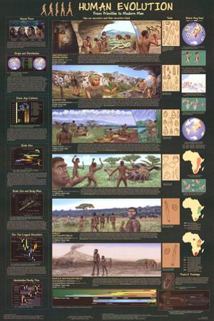 Human Evolution Educational Science Chart Poster