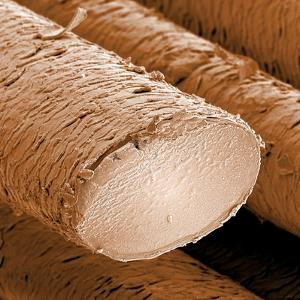 Human Hair Magnified 1250x