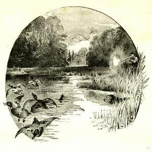 Hunt Austria 1891