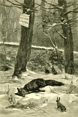 Hunting Fox Austria 1891