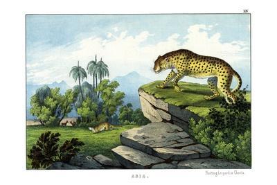 https://imgc.allpostersimages.com/img/posters/hunting-leopard-1860_u-L-PVBWTH0.jpg?p=0