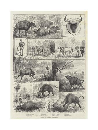 https://imgc.allpostersimages.com/img/posters/hunting-the-gaour-or-indian-bison_u-L-PVM9QQ0.jpg?p=0
