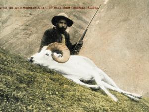 Hunting Wild Big Horn Sheep in Alaska
