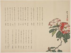 Flowering Camellia, C.1818-1829 by Hyakuj?