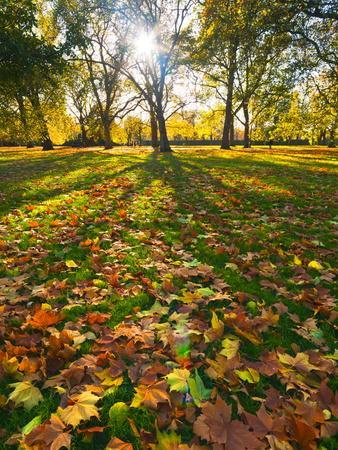 https://imgc.allpostersimages.com/img/posters/hyde-park-in-autumn-london-england-united-kingdom-europe_u-L-PFL4IJ0.jpg?p=0