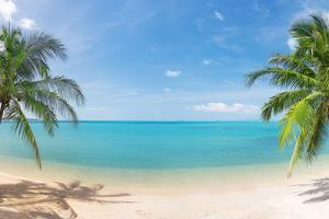 Panoramic Tropical Beach with Coconut Palm by Hydromet
