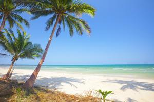 Tropical Beach with Coconut Palm by Hydromet