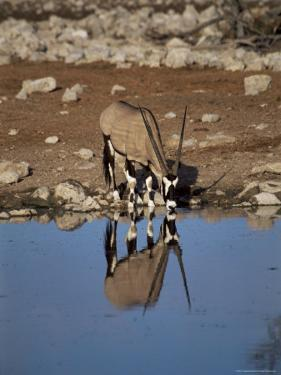 Oryx at Waterhole, Namibia, Africa by I Vanderharst