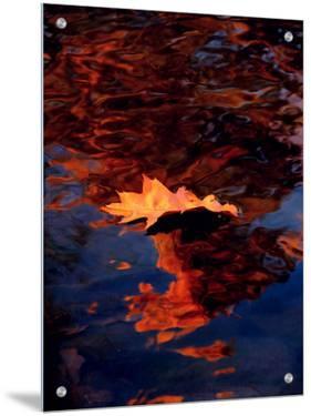 Autumn Leaf in Lake by I.W.