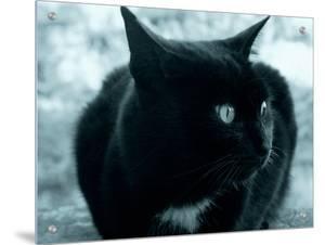 Black Cat by I.W.