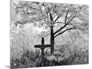 Crucifix Near Tree in Cemetery by I.W.