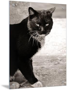 Cute Black Cat with White Paws by I.W.
