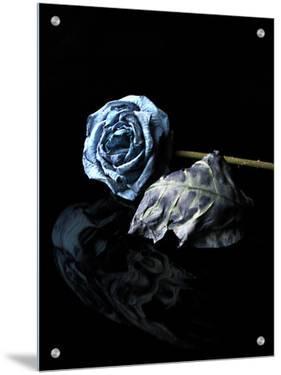 Dried Blue Rose and Leaf by I.W.