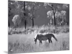 Horse Grazing in Open Field by I.W.