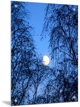 Moon Seen Through Trees by I.W.