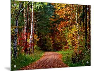 Narrow, Dirt Road Through Autumn Woods by I.W.