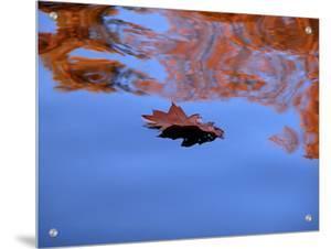 Oak Leaf Floating in Water by I.W.