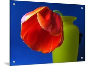 Orangish Red Tulip in a Green Vase by I.W.