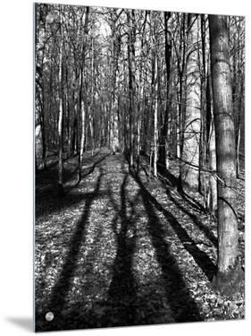 Tree Shadows in Forest by I.W.