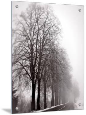 Trees in Foggy Winter Landscape by I.W.